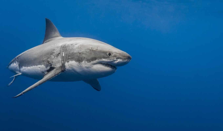 Картинки на телефон акула   подборка (20)