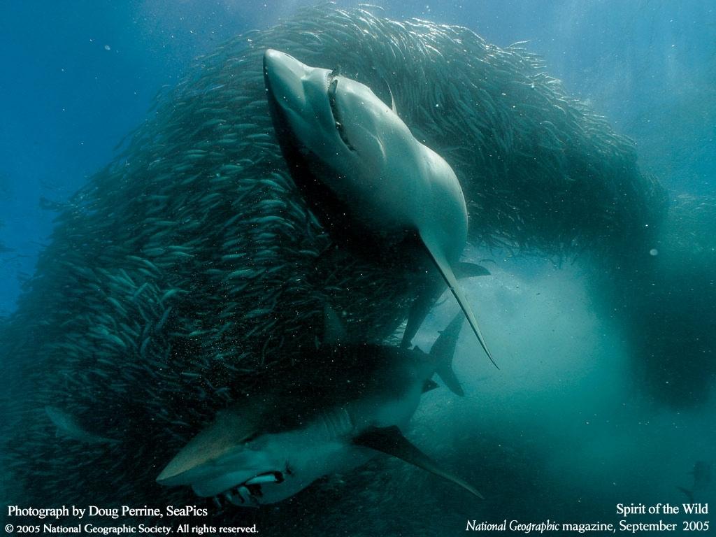 Картинки на телефон акула   подборка (3)