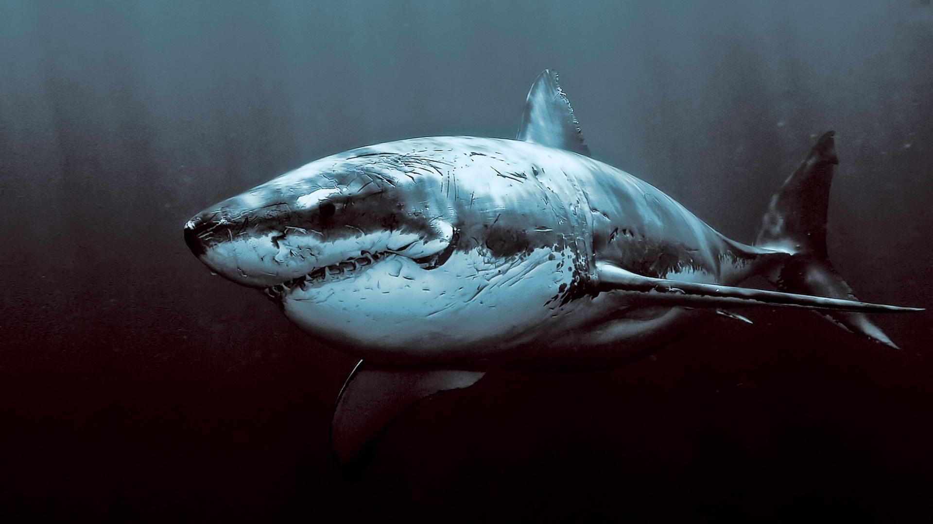 Картинки на телефон акула   подборка (5)