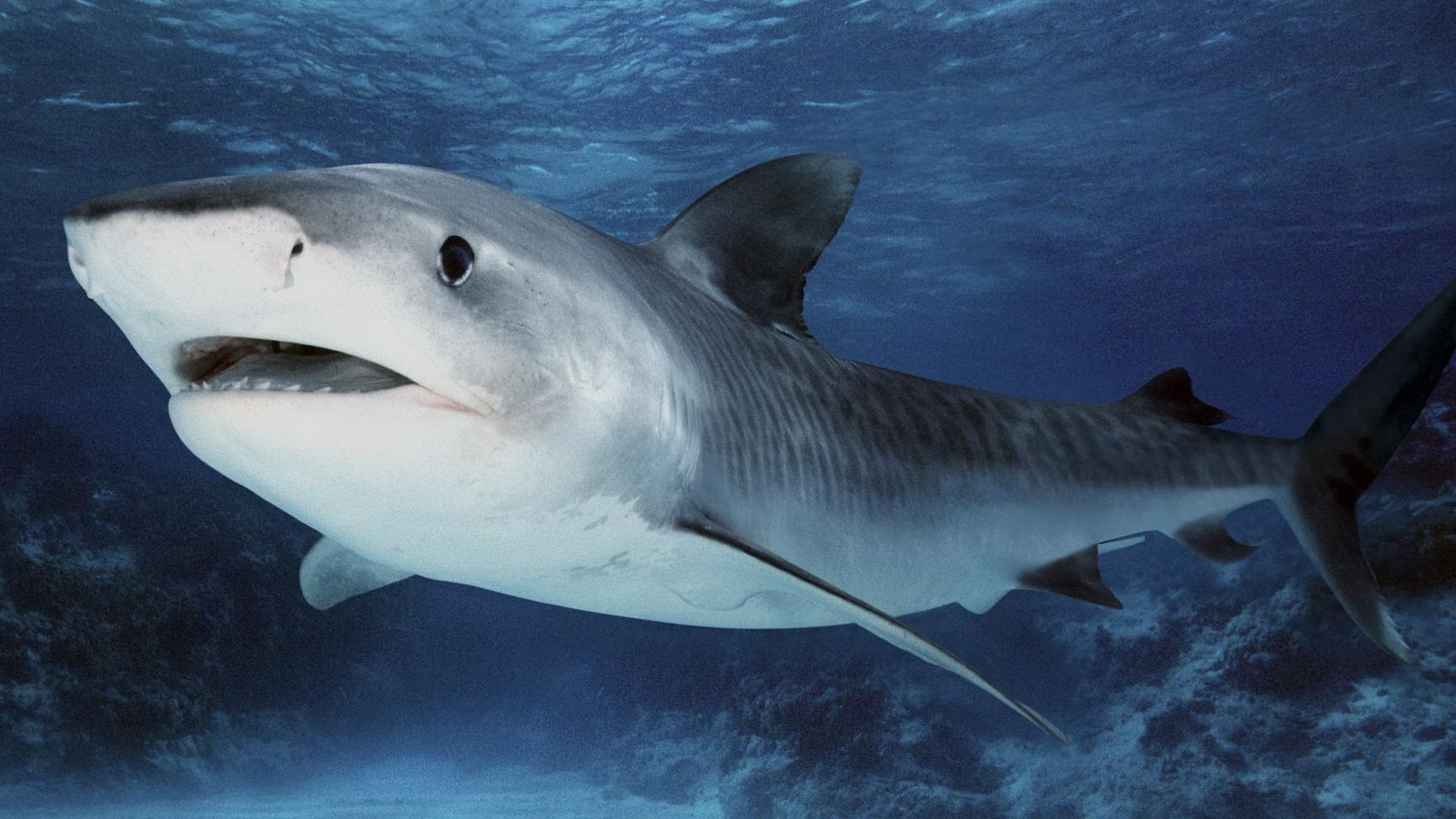 Картинки на телефон акула   подборка (7)