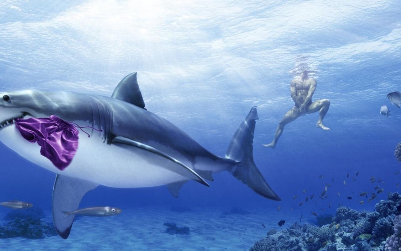 Картинки на телефон акула   подборка (8)