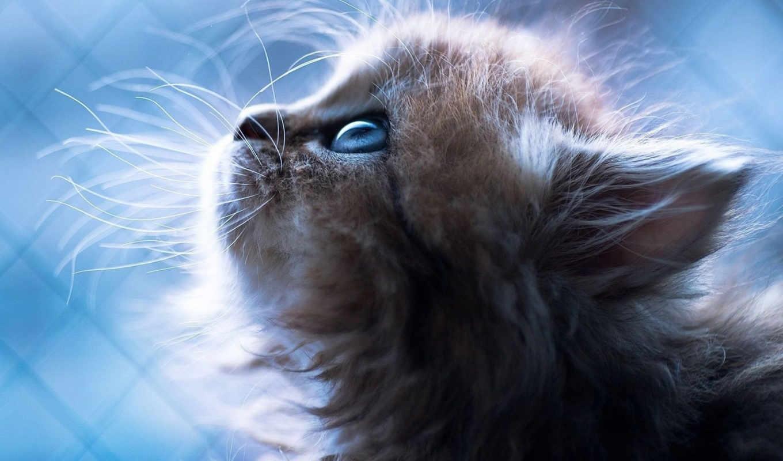 Картинки на телефон котята скачать   обои (11)