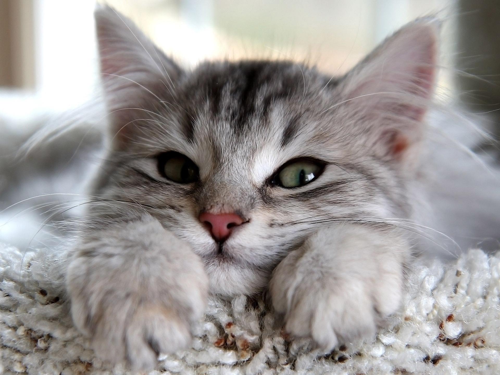 Картинки на телефон котята скачать   обои (12)