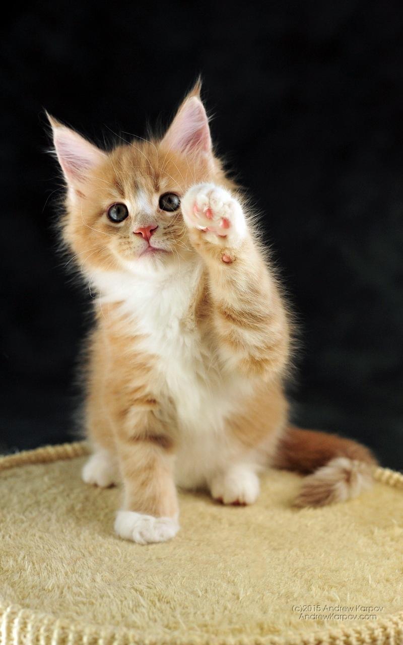 Картинки на телефон котята скачать   обои (13)