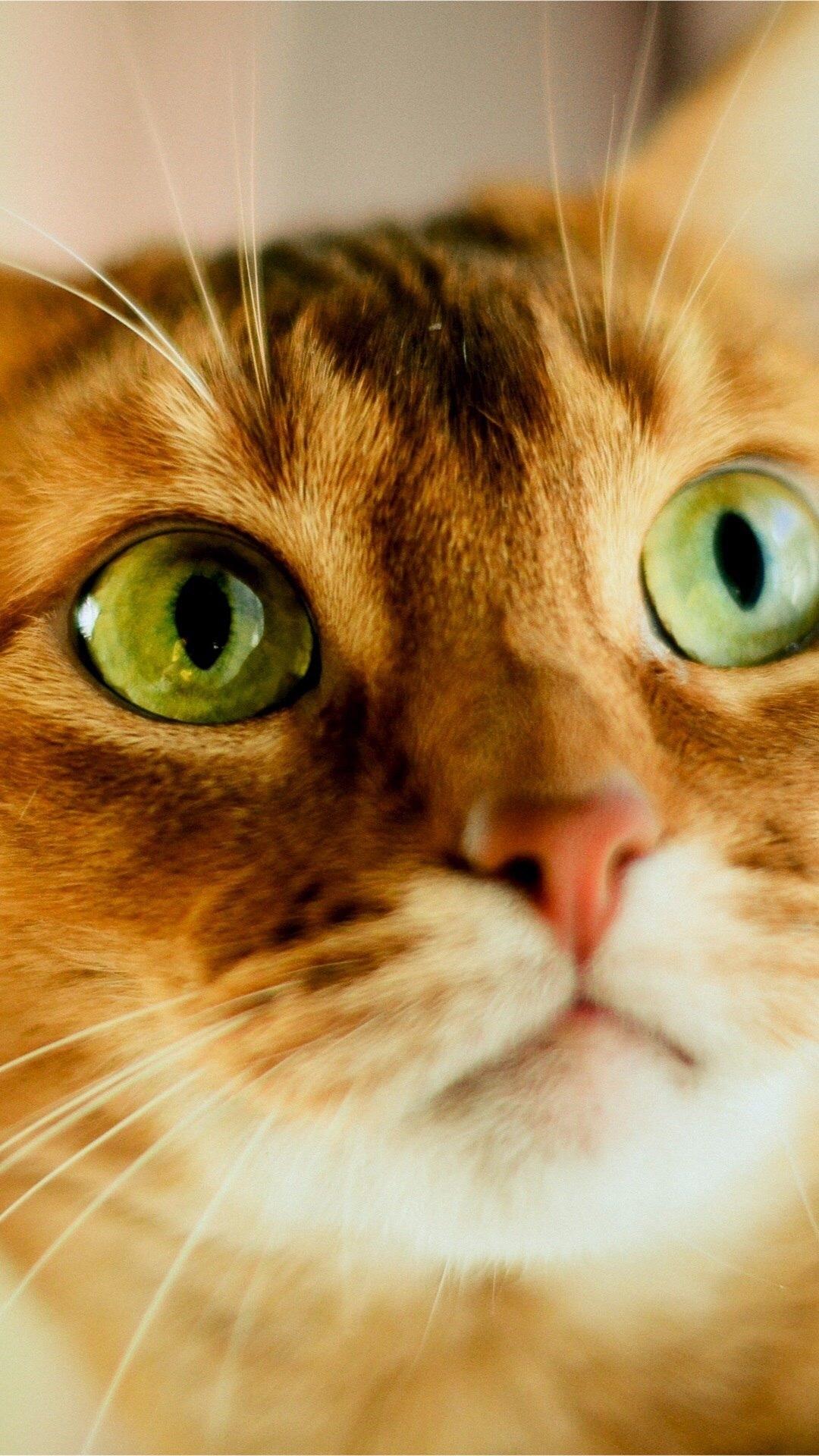 Картинки на телефон котята скачать   обои (15)