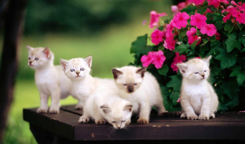 Картинки на телефон котята скачать   обои (18)