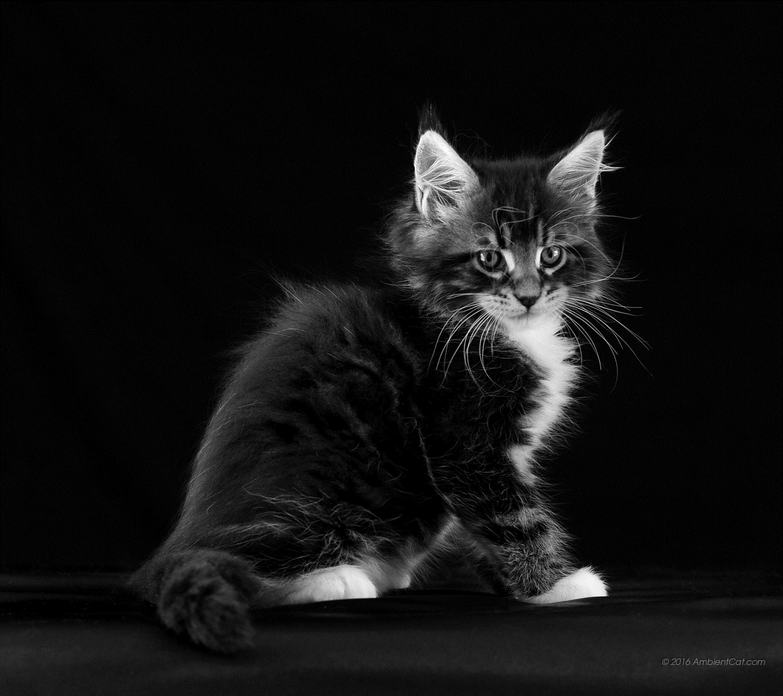 Картинки на телефон котята скачать   обои (20)