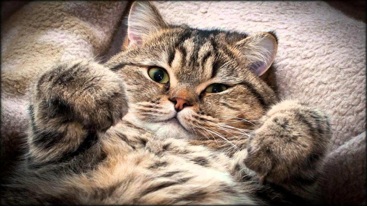 Картинки на телефон котята скачать   обои (22)
