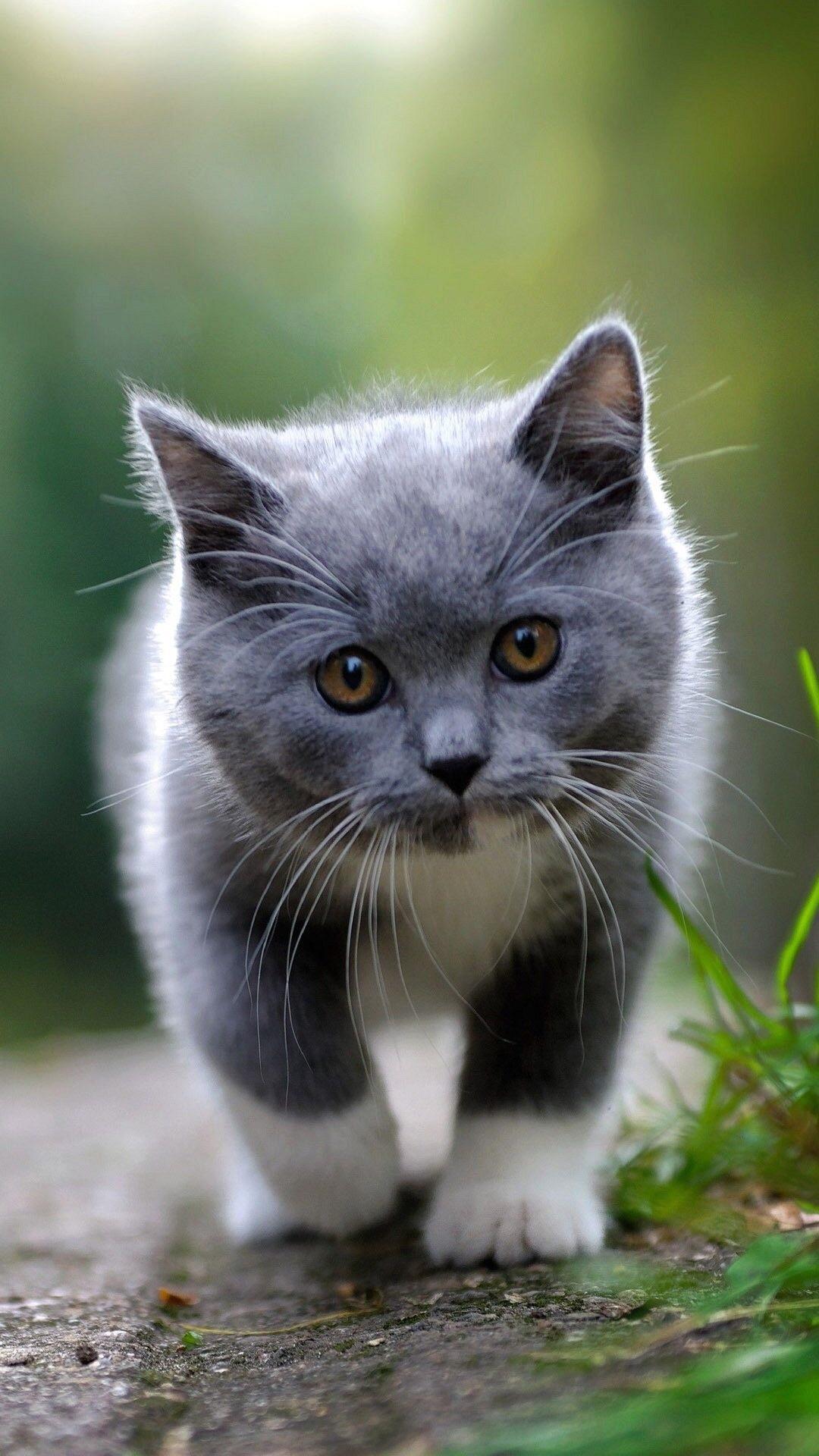 Картинки на телефон котята скачать   обои (4)