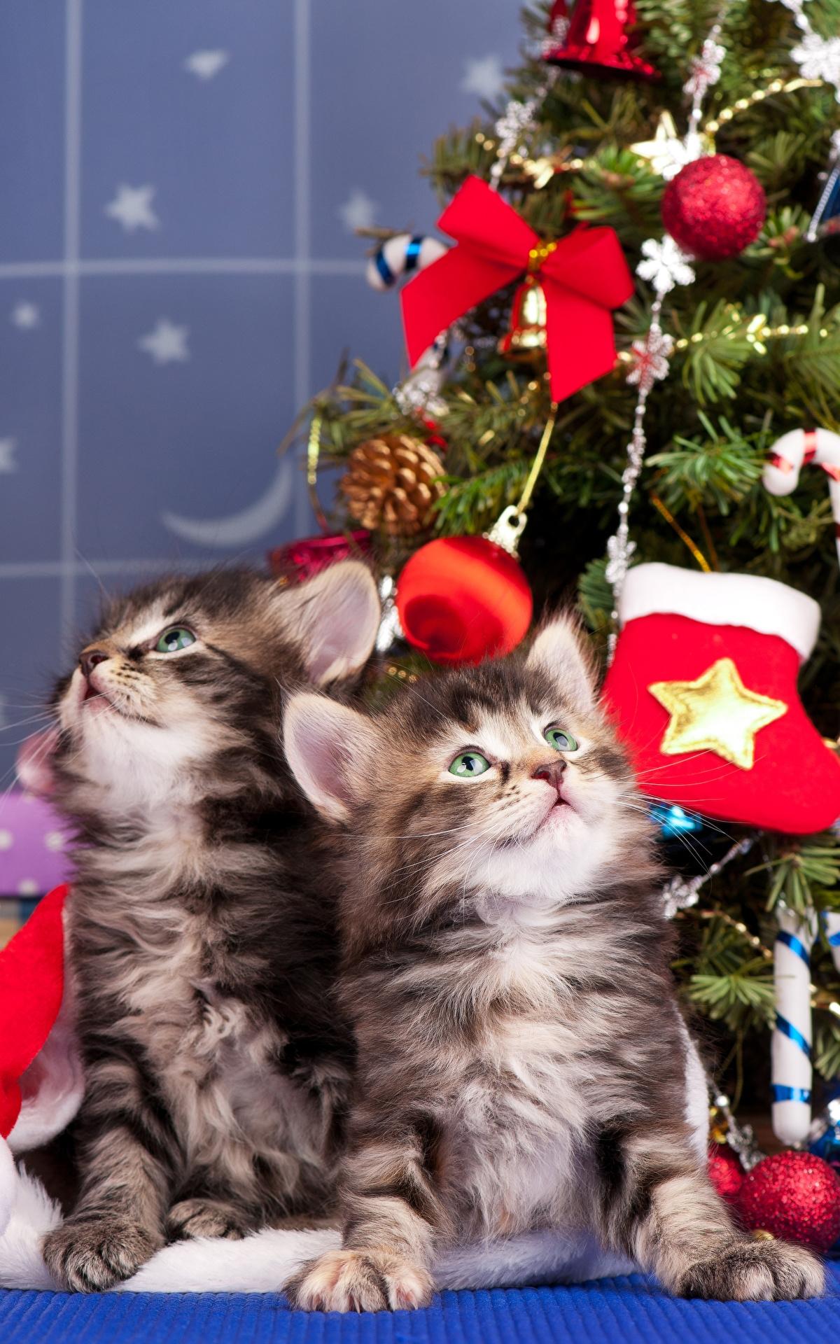 Картинки на телефон котята скачать   обои (7)