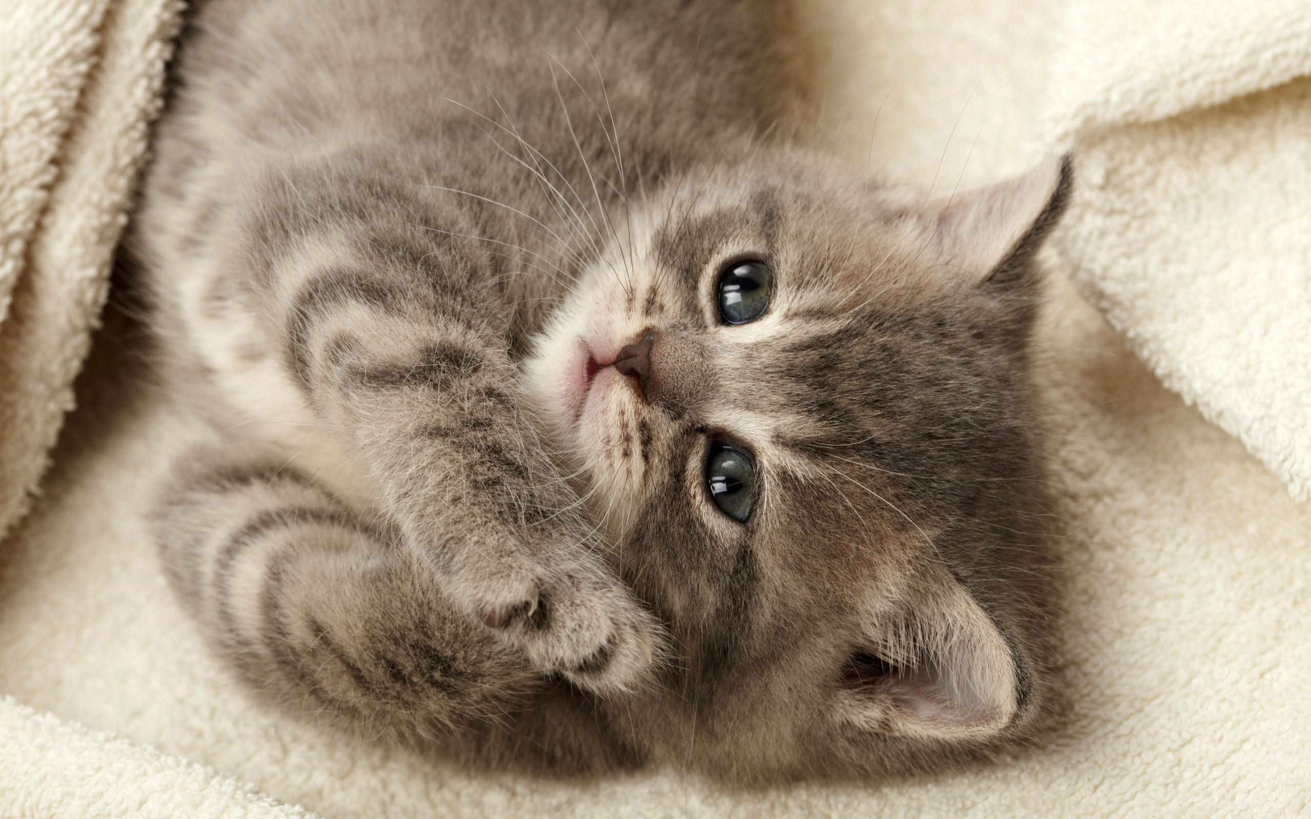 Картинки на телефон котята скачать   обои (8)