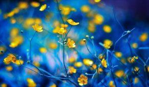 Картинки на телефон hd цветы   подборка (20)