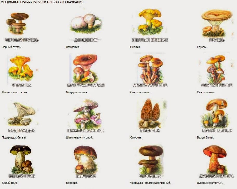 Картинки съедобных грибов с названием