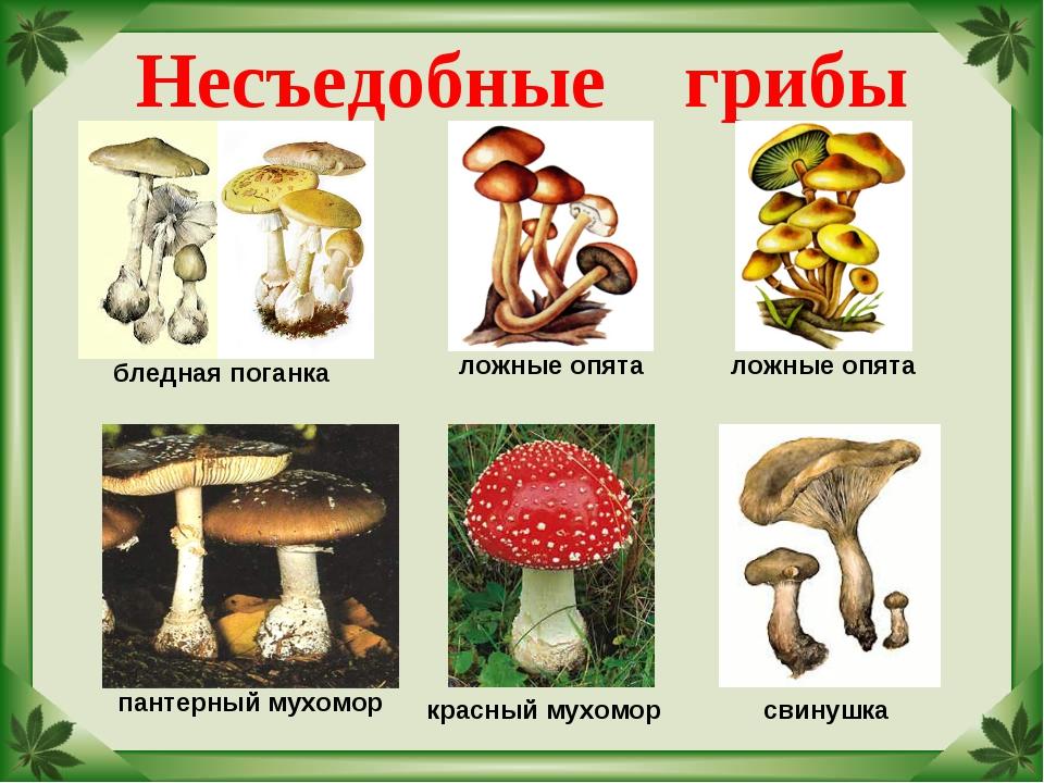 Картинки грибов съедобных и ядовитых для детей