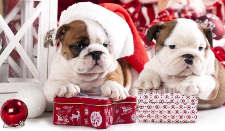 Картинки новый год собачки   фото 001