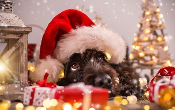 Картинки новый год собачки   фото 002