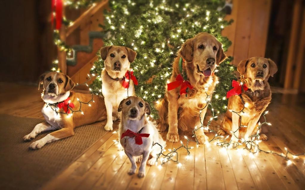 Картинки новый год собачки   фото 003
