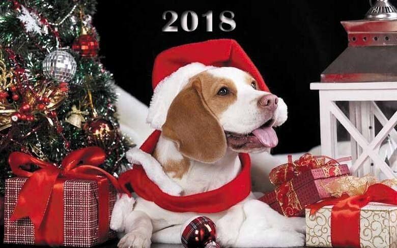 Картинки новый год собачки   фото 004