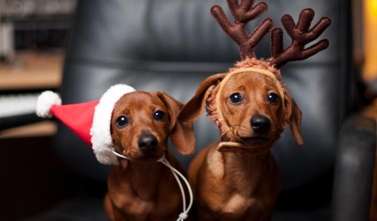 Картинки новый год собачки   фото 005