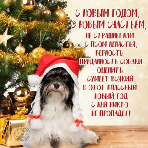 Картинки новый год собачки   фото 006