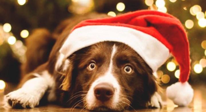 Картинки новый год собачки   фото 008