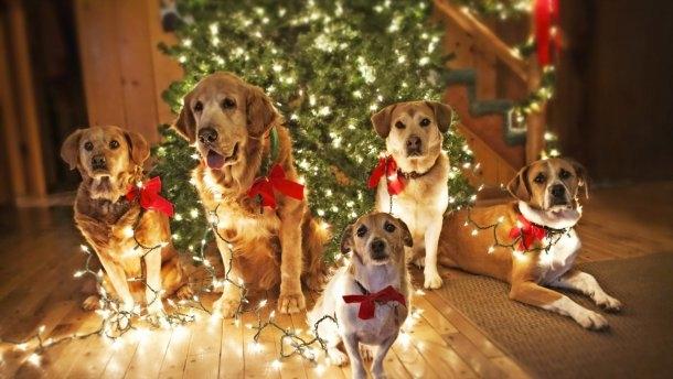 Картинки новый год собачки   фото 009