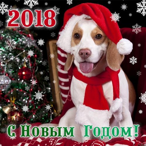 Картинки новый год собачки   фото 010