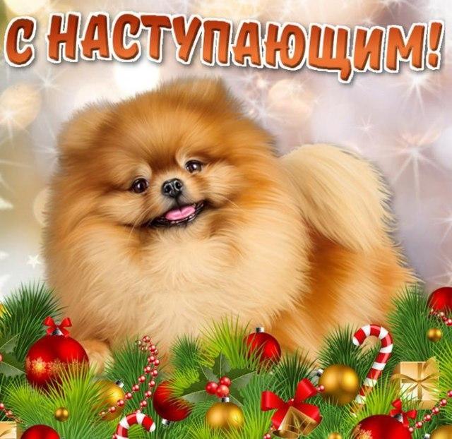 Картинки новый год собачки   фото 011