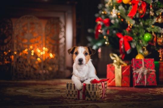 Картинки новый год собачки   фото 012