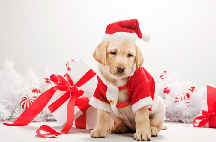 Картинки новый год собачки   фото 013
