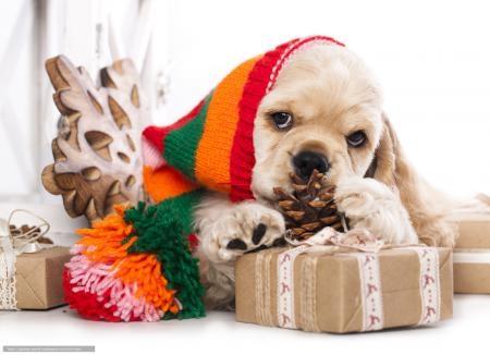 Картинки новый год собачки   фото 014