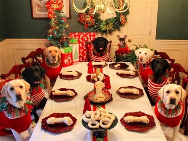 Картинки новый год собачки   фото 019