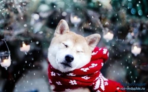 Картинки новый год собачки   фото 020