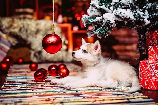Картинки новый год собачки   фото 021