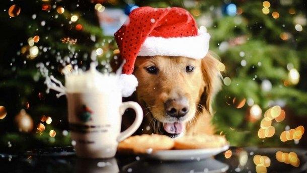 Картинки новый год собачки   фото 022