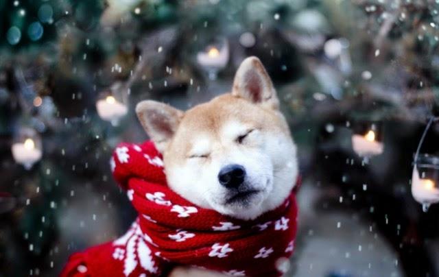 Картинки новый год собачки   фото 023