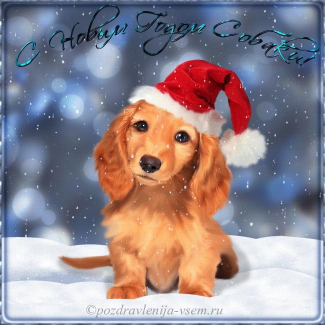Картинки новый год собачки   фото 024