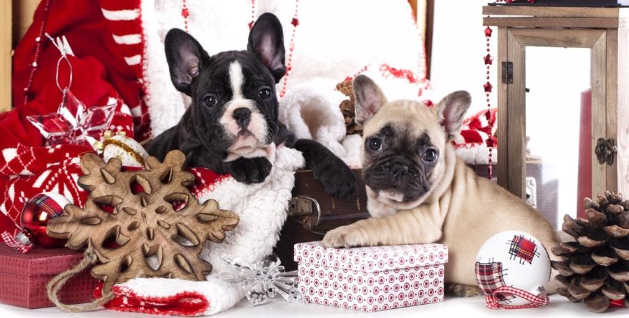 Картинки новый год собачки   фото 025