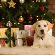 Картинки новый год собачки   фото 026