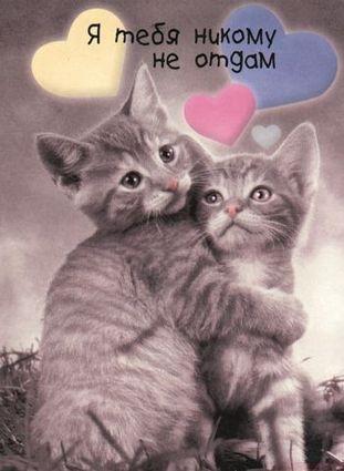 Картинки обнимаю тебя и люблю012