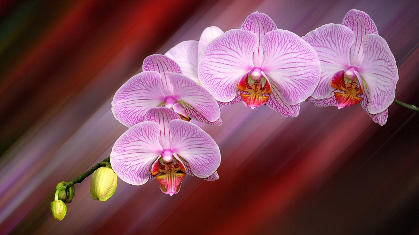 шарики картинки с орхидеями на рабочий побережью, настолько увлекаемся