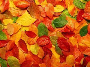Картинки осенние листья на земле   подборка фото 029