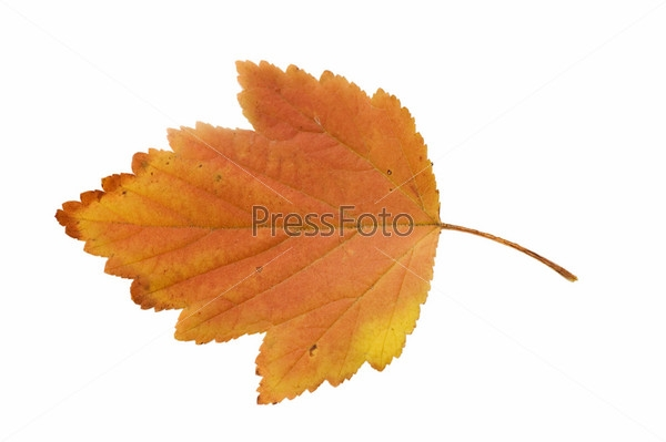 Картинки осенний листок нарисованный   подборка 022