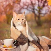 Картинки осень кофе любовь   подборка фото029