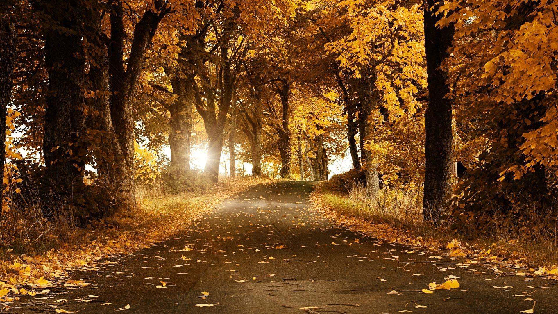 Картинки осень на комп   очень красивые (14)