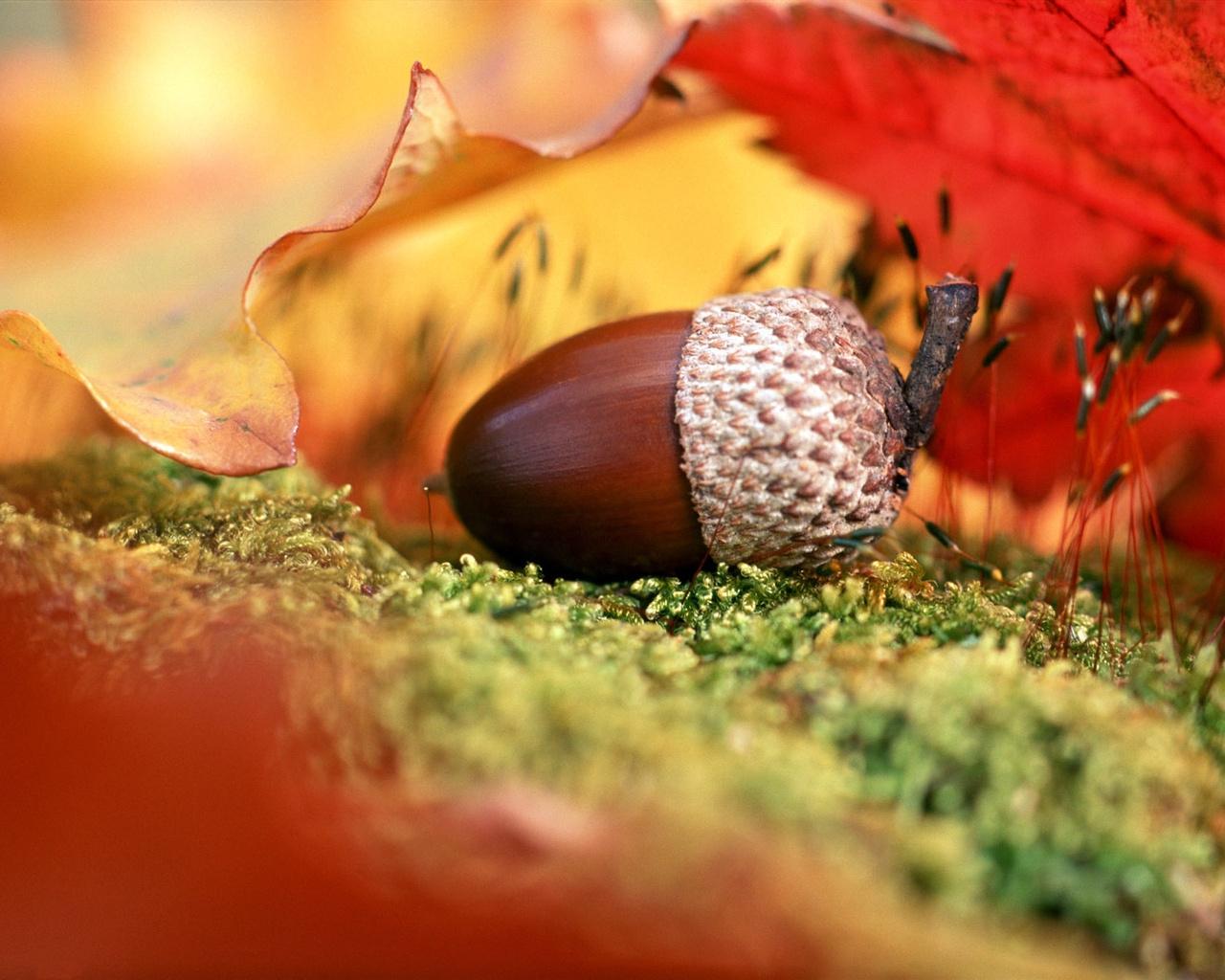 Картинки осень на комп   очень красивые (15)