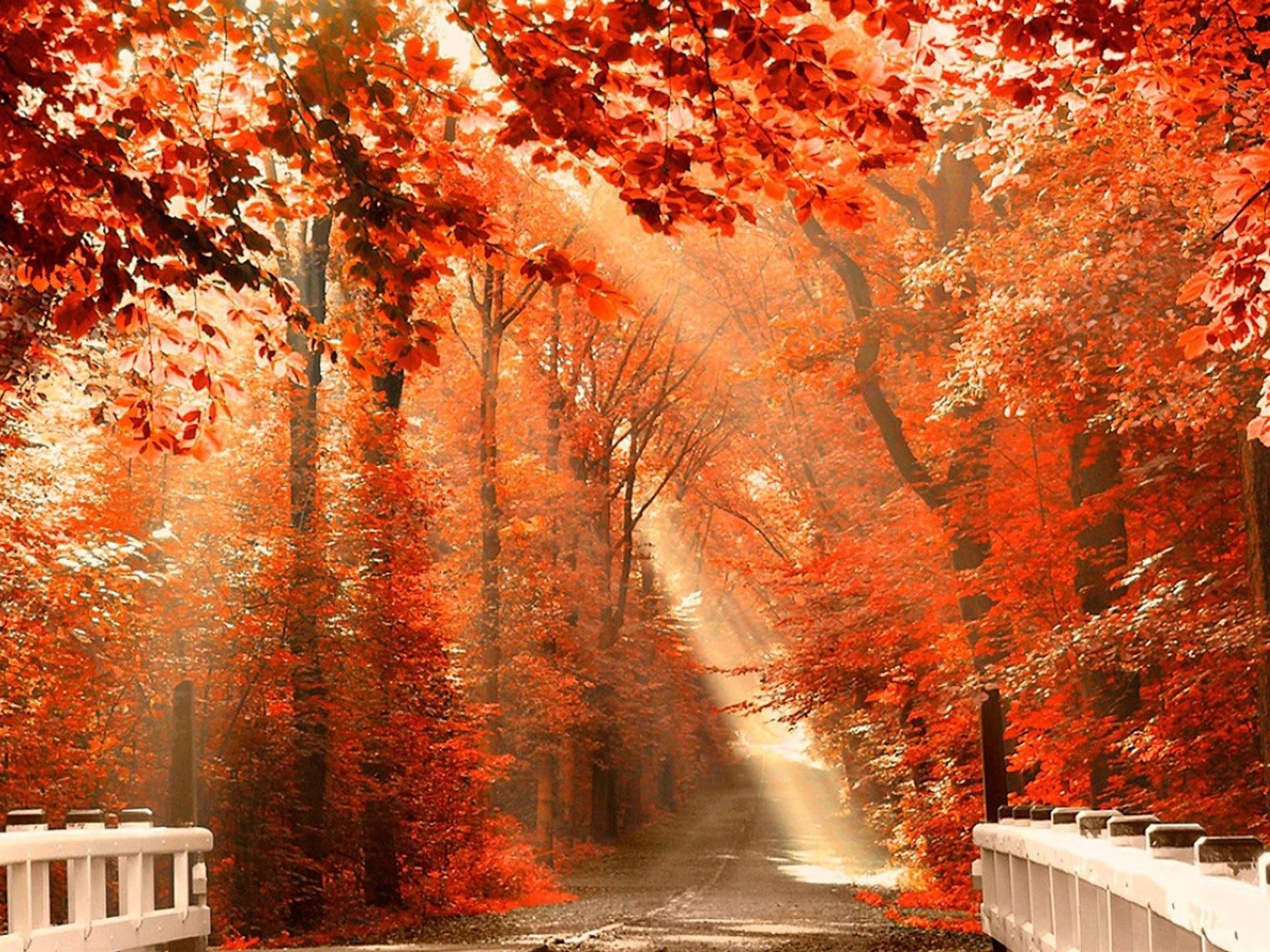 Картинки осень на комп   очень красивые (7)