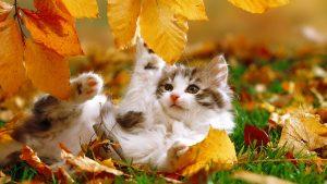 Картинки осень с животными на рабочий стол017