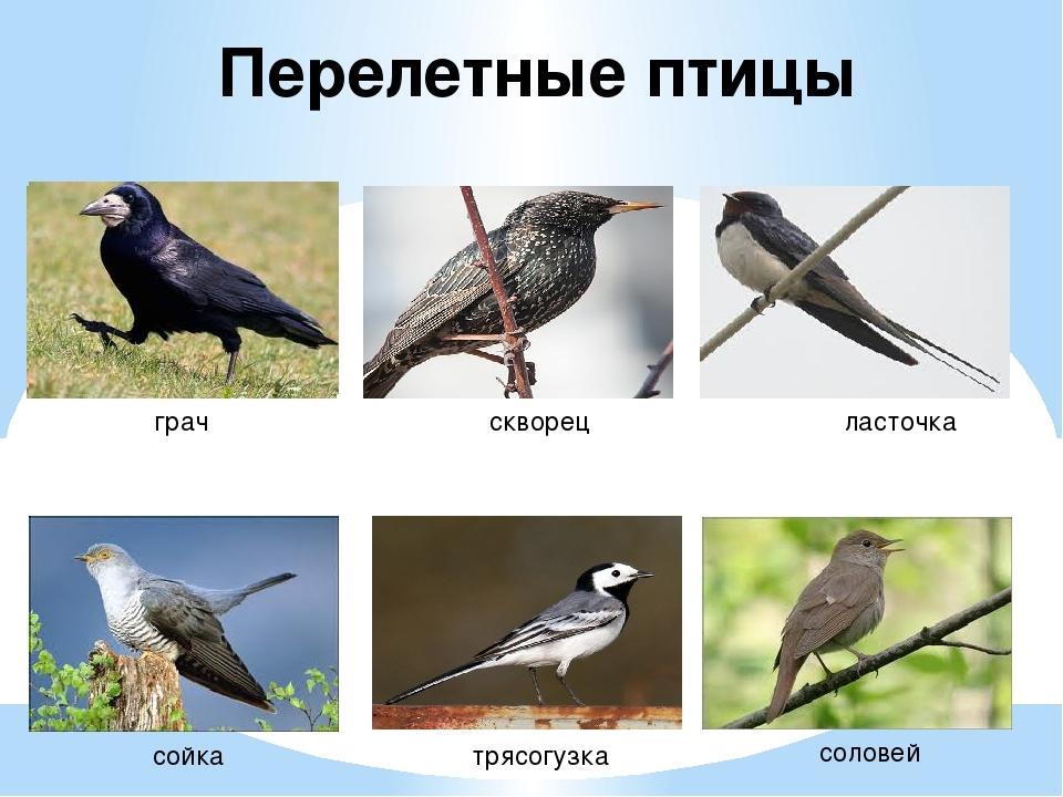 Птицы картинки и названия птиц детям