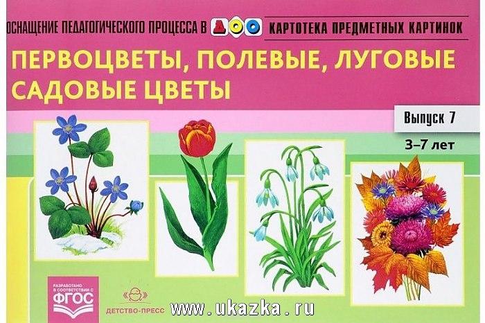 Картинки полевых цветов   красивые и увлекательные (17)